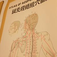 鍼灸経絡経穴図鑑