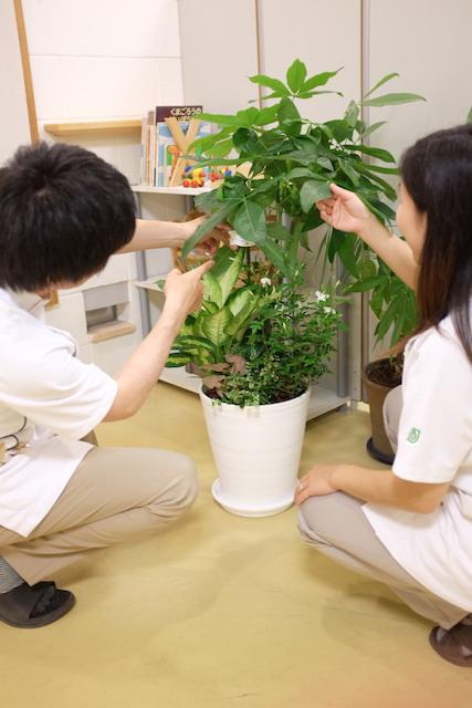 養気院の観葉植物
